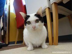 Cat Travel: Neko Maru Cat Cafe - 猫まるカフェ Ueno Part 6 - The Grand Finale