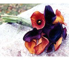 Plum & Tangerine Callas