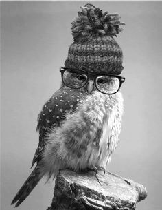Hipster owl Pinned by www.myowlbarn.com Write a newspaper article about this very intelligent, wise owl and why he came to town.