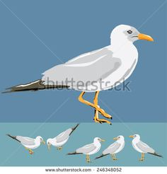 Vector illustration set of seagulls on background.  - stock vector