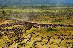 TATO-Tanzania Association of Tour Operators