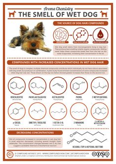 Why do wet dogs smell so. Have you ever wondered why dogs don't exactly smell of roses after their fur gets wet? 🐶A look at the of wet smell Polymer Chemistry, Science Chemistry, Organic Chemistry, Teaching Science, Science Education, Chemistry Classroom, Science Revision, Study Chemistry, Science Geek