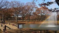Yoyogi Park (代々木公園, Yoyogi Kōen) is one of Tokyo's largest city parks, featuring wide lawns, ponds and forested areas.