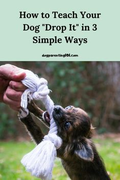 """Teaching your dog """"drop it"""" is an important command for him to learn, so start as soon as possible. It could one day save his life. #dropit #dogsafety #trainyourdog Dog Health Tips, Pet Health, Pet Sitters International, Group Of Dogs, Cute Dog Photos, Dog Games, Dog Safety, Pet Costumes, Dog Recipes"""