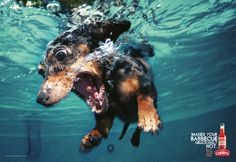 dachshund hot stuff, dachshund, silly dogs, barbecu, underwater dogs, pepper, dog photography, puppi, hot sauces