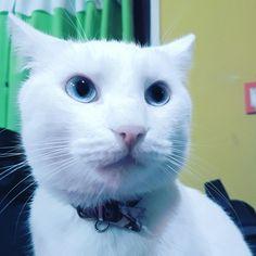 Eyes ojitos