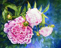 Peony - original watercolor painting by H Cooper - prints available at Fine Art America