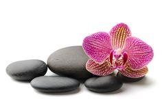 Спа камни и цветок орхидеи: 9 тыс изображений найдено в Яндекс.Картинках