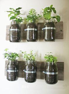 Mason Jar Wall Planter {mason jar} ~ Learn how to create an adorable indoor or outdoor wall planter. These jars would look so cute on a kitchen wall filled with herbs! You can make your own wall planter by using mason jars, an old board, and pipe clamps. Mason Jar Herbs, Mason Jar Herb Garden, Mason Jar Planter, Mason Jar Diy, Herbs Garden, Pots Mason, Garden Terrarium, Plants In Mason Jars, Tea Herbs