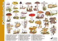 Op deze geplastificeerde herkenningskaart / zoekkaart staan de veel voorkomende paddenstoelen afgebeeld.
