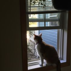 Cried until I opened the window so she could catch the breeze. #highmaintenancecat #jynger