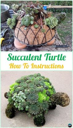 How To Make Garden Succulent Turtle – A Website For All The Ideas You Will Ever Need
