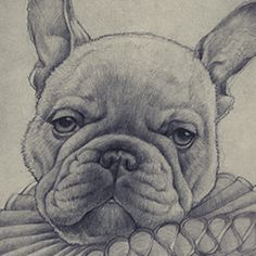 Animal portraits drawn entirely with pencil and realized by the Syrian artist Hani Troudi.