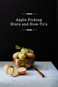 Apple Picking Guide /