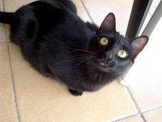 Helfende Hände e.V. - Katze Nelly (EKH 1-2 Jahre) sucht ein Zuhause   Steckbrief…