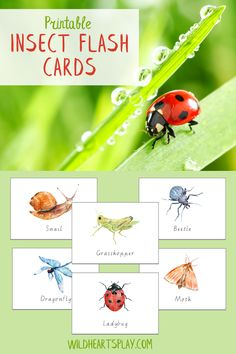 This set of 12 beautiful insect flash cards can be can be used for a wide range of learning activities and games, both at home and in the classroom. Print two sets to play Insect Memory Match or print four sets to play Insect Snap! By Wild Hearts Play. #wildheartsplay #etsy #printable #etsyprintable #flashcards #printableflashcards #printableflashcards #insects #insectflashcards #instantdownload #teducationprintable #teachingprintable #bugs #bugflashcards Preschool Science Activities, Printable Activities For Kids, Preschool Printables, Learning Activities, Free Printables, Toddler Learning, Early Learning, Fun Learning, Easy Crafts For Kids