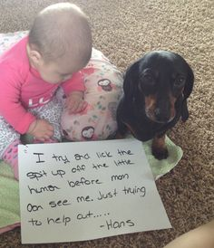 Hans thinks it fun to try and lick the babies mouth. Dachshund Funny, Dachshund Puppies, Dachshund Love, Funny Dogs, Cute Baby Animals, Funny Animals, Animal Funnies, Dog Funnies, I Love Dogs