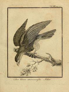 Büffons Naturgeschichte der Vögel T.1  Leipzig :bey Hermann Heinrich Holle,1775-1782.  Biodiversitylibrary. Biodivlibrary. BHL. Biodiversity Heritage Library
