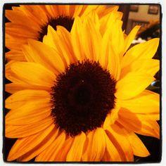 Pretty flowers from my Sissy!