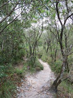 Milena MenezesFisionomia: Mata Atlântica, Cerrado e Campos Rupestres. Local: Parque Estadual do Ibitipoca.