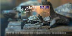 Passatempo: Ganhe 2 Bilhetes de adulto para o Sealife Porto