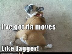 Funny boxer dog pictures with captions – Animal Life Funny Animal Pictures, Funny Animals, Cute Animals, Animal Funnies, Animal Pics, Talking Animals, Animal Memes, Funny Photos, Funny Boxer