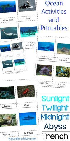 Montessori Theme Ocean Preschool Activities & Printables, The Best way to learn Ocean Zones, Ocean Animals, 3-part cards, Montessori Math, Under the Sea