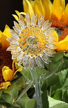 Waterford Crystal Sunflower for Eva Happy Flowers, Beautiful Flowers, Cut Glass, Glass Art, Jeff Leatham, Sunflowers And Daisies, Sunflower Art, Sunflower Kitchen, Crystal Meanings