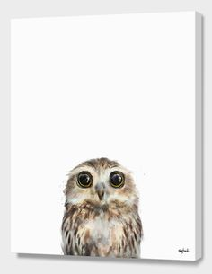 """""""Little Owl"""", Numbered Edition Canvas Print by Amy Hamilton - From $89.00 - Curioos"""