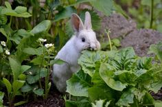 Memories . . .When visiting our Little Grandma as children, my sister and I would chase these little creatures out of her vegetable garden when we saw them doing this!