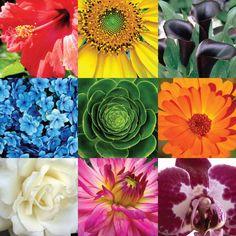 flores as cores - Pesquisa Google
