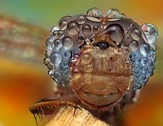 40 beautiful examples of macro photography