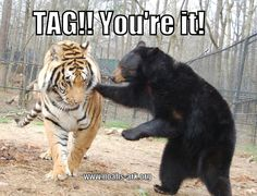 Tag, you're it!   Doc the tiger & Little Anne the bear are a comical little duo! www.noahs-ark.org #LOL #Meme #Animal #Funny #humor #tiger #bear #nevergrowup #noahsark #tag