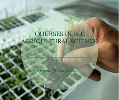 Get the best BSc in Agriculture & Horticulture Courses in India by Dolphin College. Visit us to find B Sc agriculture colleges course & B Sc agri details. Science Labs, Agricultural Science, College Courses, Horticulture, Productivity, Students, Activities, Future, Products