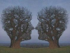 Facetrees