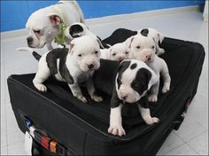 A man in Toledo, Ohio, was charged with animal abandonment after he put six puppies inside a zipped-up suitcase and left it near a trash bin behind a business, police said. The puppies were discovered after the mother of the dogs was seen hanging around the suitcase and a passerby went to investigate. Police said the suitcase had the name of the man on it.