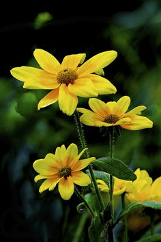 268 Best Flowers Images Paint Flower Art Landscape