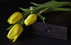Yellow Tulips - tulipany, sweet, kuferek, for you, box, flowers, romance, still life, delicate, gift, leaves, photography, romantic, tulip, three, martwa, with love, wooden box, tulips, nice, petals, nature, yellow, beauty, beautiful, lovely, bouquet, yellow tulips, spring, tenderness, pretty, yellow tulip, natura