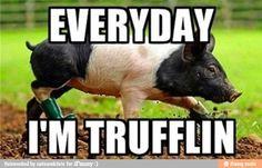 Truffle in