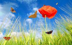 Red Flower Butterfly Beautiful Wallpaper