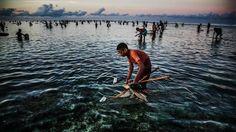 Tradisi Bau Nyale di Pulau Lombok
