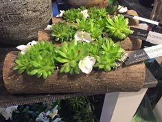 Vet plant in houten bloem bak