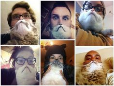 Cat-bearding! How do I get my cat to cooperate with this????