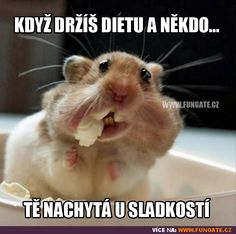 All information about Funny Hamsters Eating. Pictures of Funny Hamsters Eating and many more. Funny Animal Jokes, Funny Animal Videos, Funny Animal Pictures, Animal Memes, Funny Photos, Funny Animals, Funny Memes, Funniest Pictures, Animal Quotes