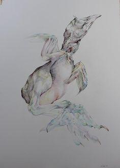 birds by kai kuper Dutch Artists, Kai, Birds, Drawings, Animals, Animales, Animaux, Bird, Sketches