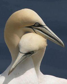 Love birds- super different/weird/intriguing looking