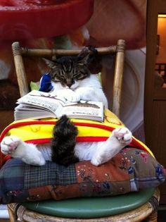 If I were a cat.....