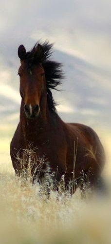 Horse - nice photo