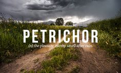 Petrichor: (n) the pleasant, earthy smell after rain. | 32 Of The Most Beautiful Words In The English Language