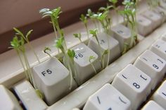omg i could so do this with an old keyboard and chia seeds